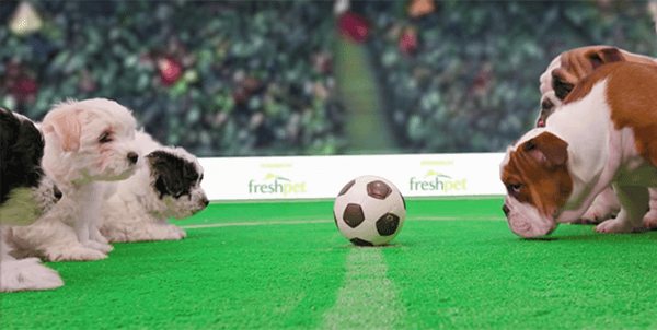 dog_world_cup