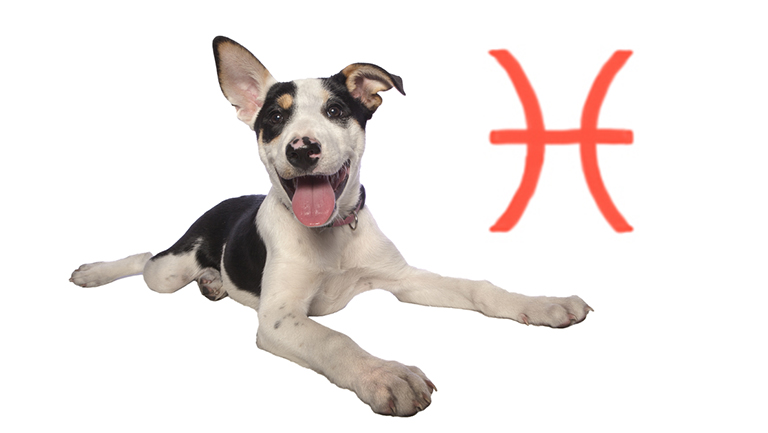 Your Pup's August Horoscope