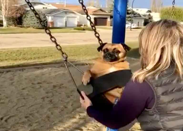 dog-on-swing