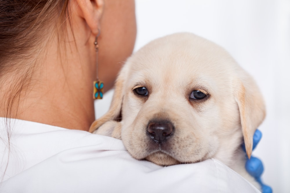 Is Your Puppy Throwing Up? Here's What