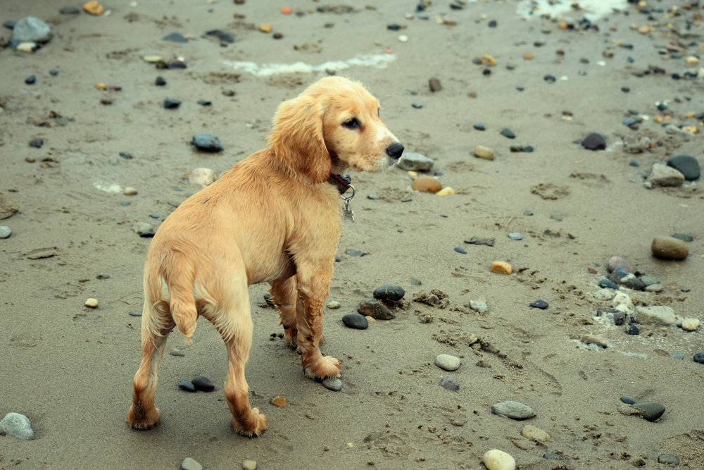 dog-on-rocky-sandy-beach