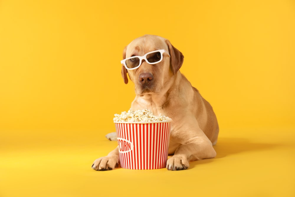 Is Popcorn Safe for Dogs? Everything
