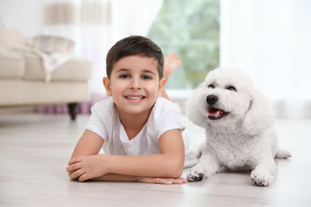 Bichon-Frise-and-little-boy-lay-on-the-floor-in-the-living-room