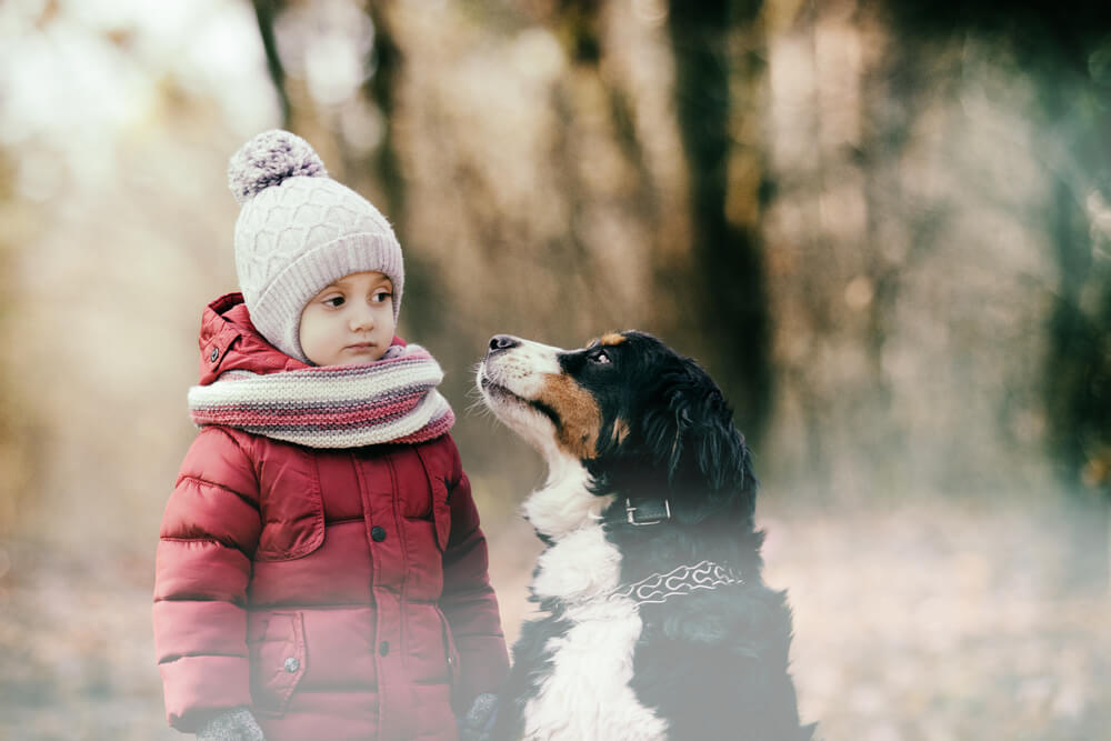 bernese-mountain-dog-goes-on-a-walk-with-little-girl