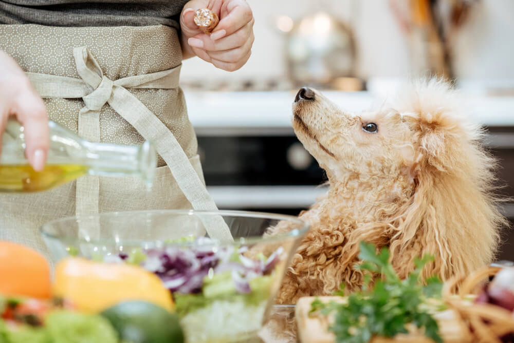 dog-waits-for-olive-oil-to-be-poured-on-his-food