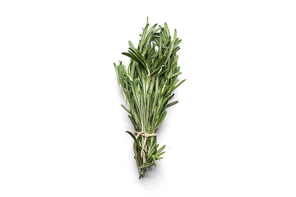 fresh-bunch-of-rosemary-for-dogs