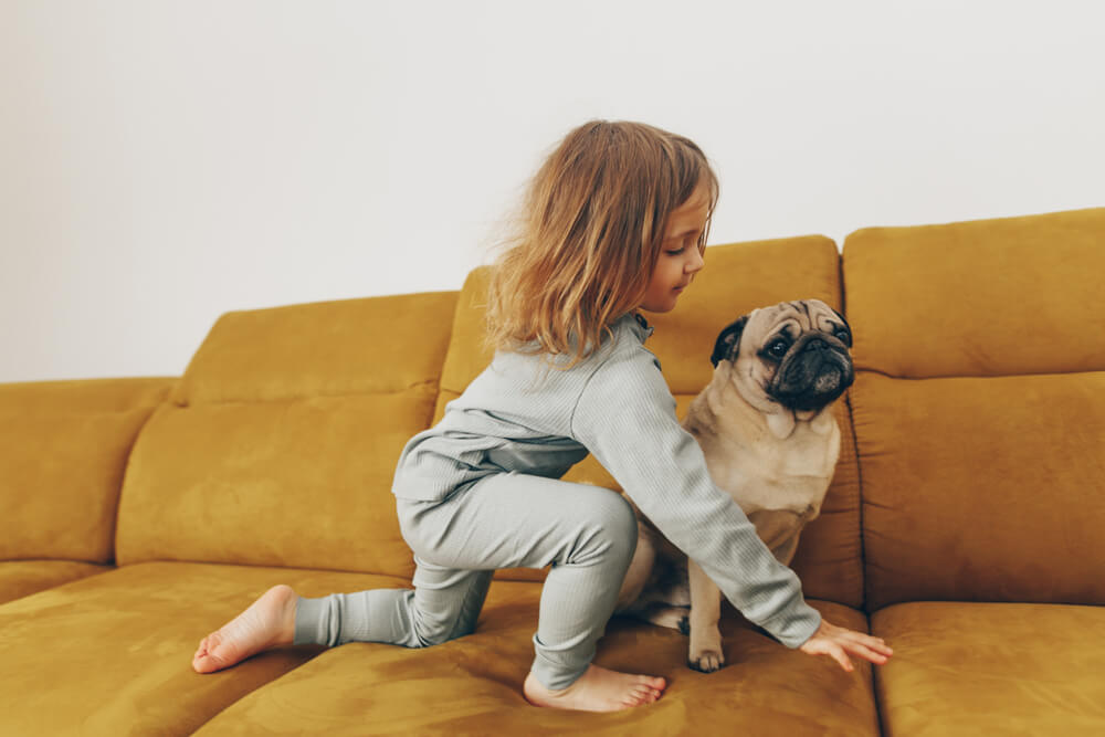 little-girl-plays-on-sofa-with-pug-dog