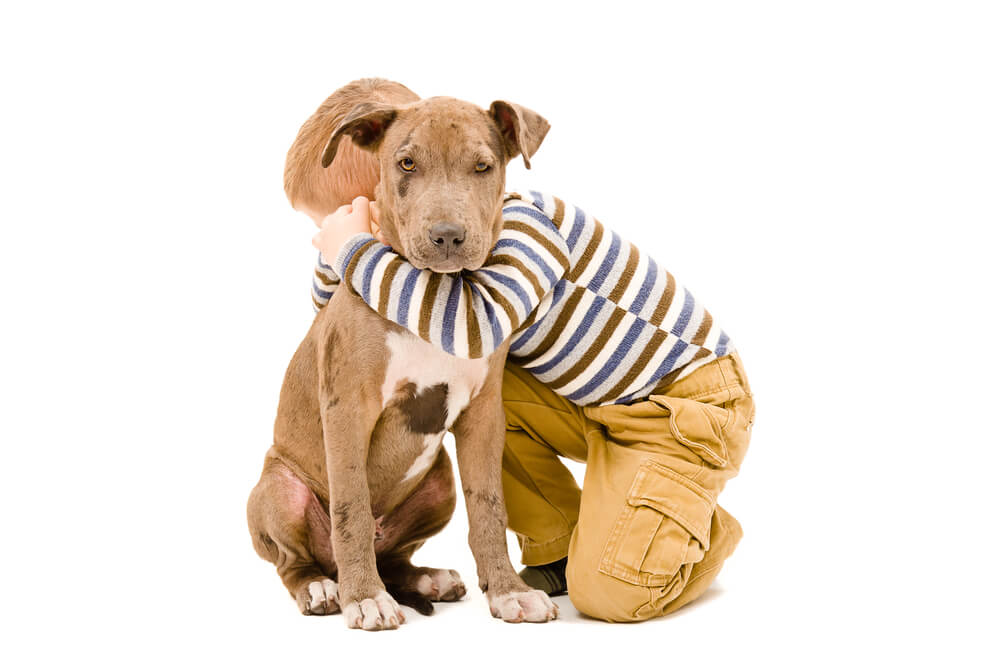young-boy-hugs-a-pit-bull-puppy