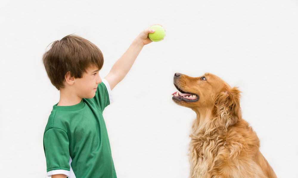 boy-training-golden-retriever-with-tennis-ball