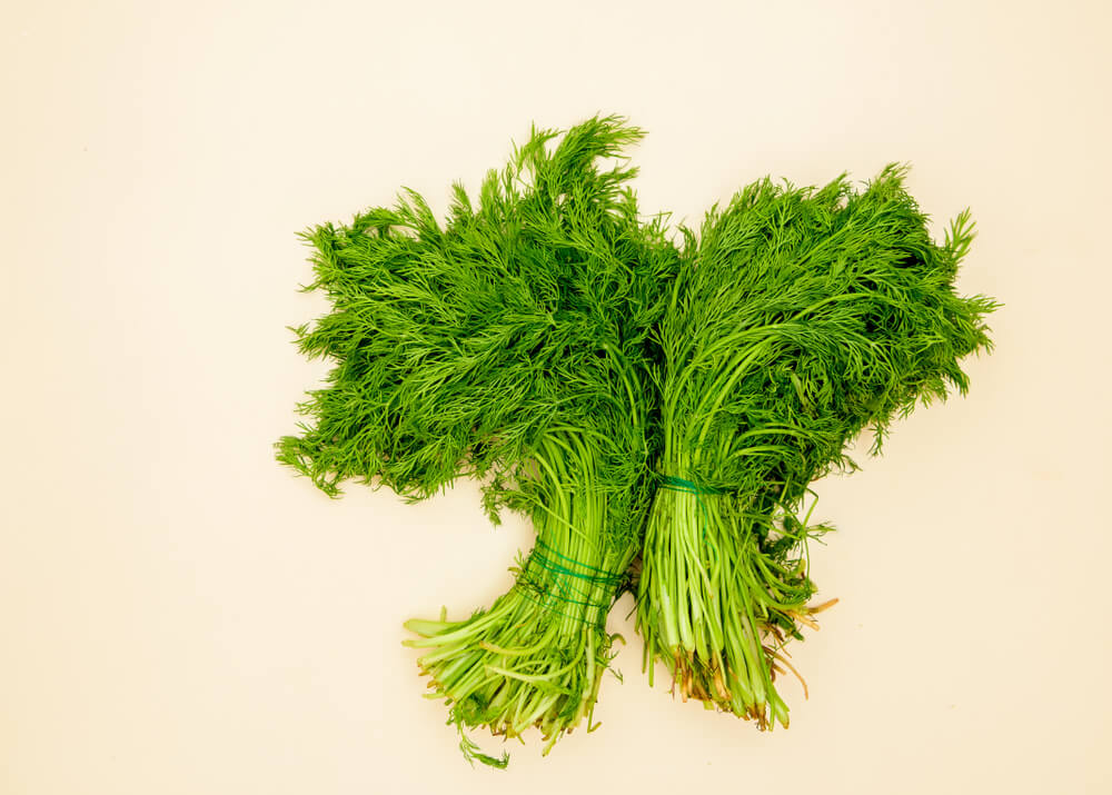 fresh-cut-dill-herb-in-bunches