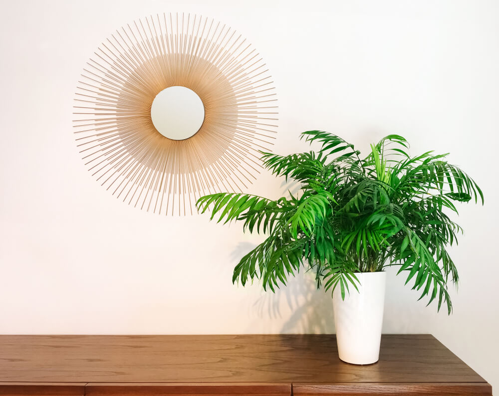 parlor-palm-in-vase-on-entryway-table