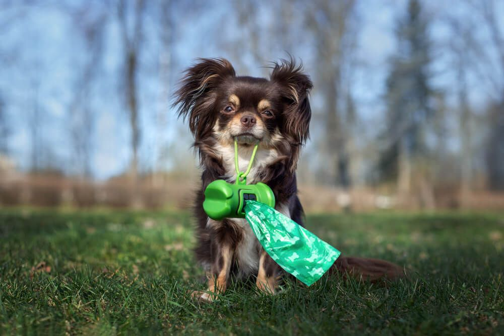 How Many Times A Day Should A Dog Poop We Asked An Expert Ollie Blog