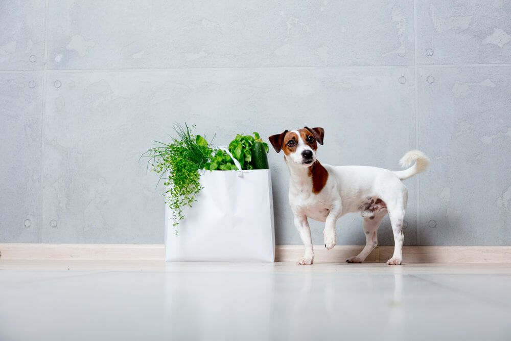 dog-with-bag-of-fresh-garlic-and-other-herbs
