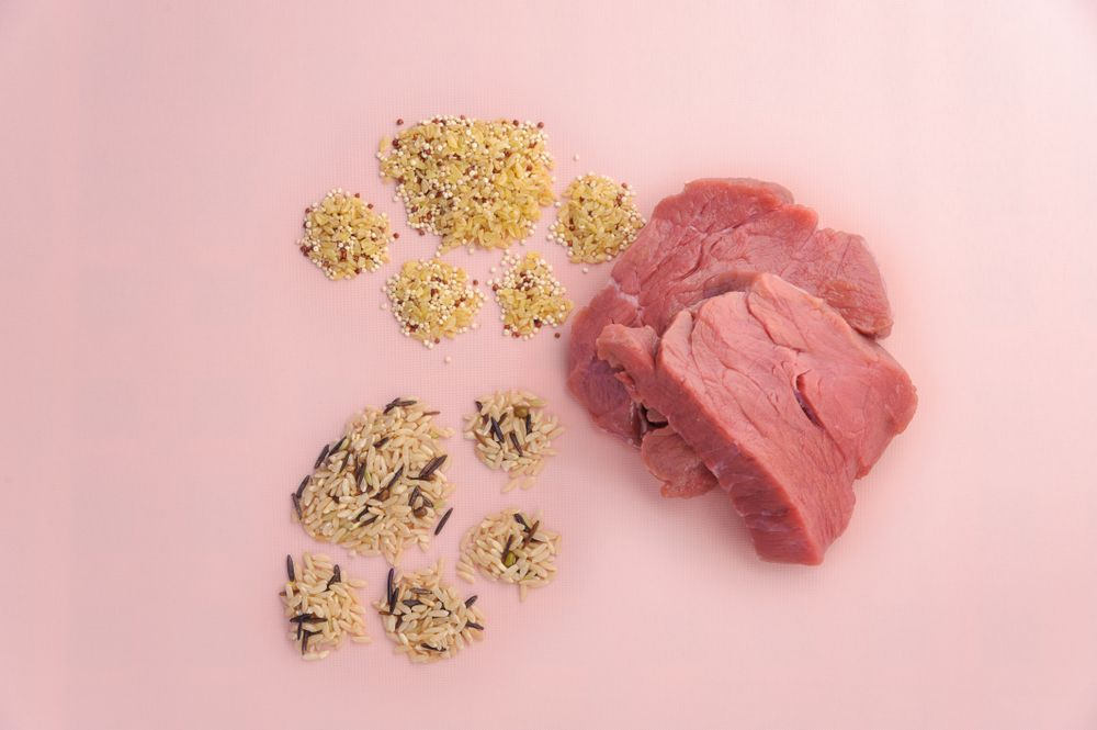 quinoa-with-grains-and-raw-meat-for-dogs