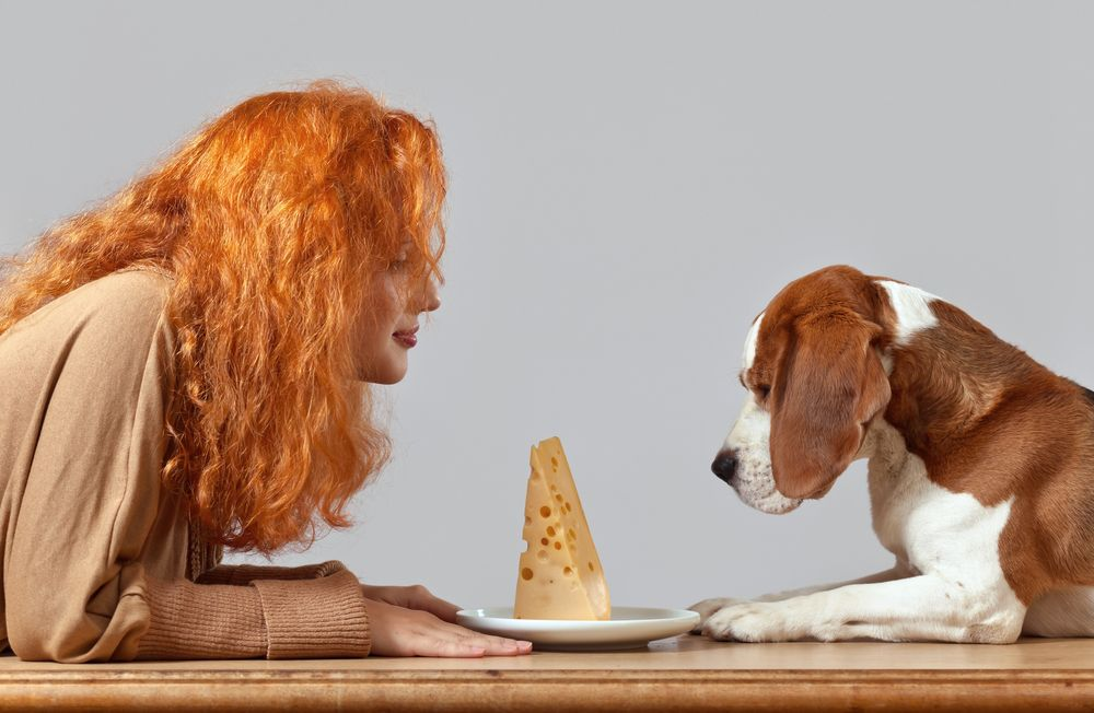 Is Cheese Bad for Dogs? Can Dogs Eat