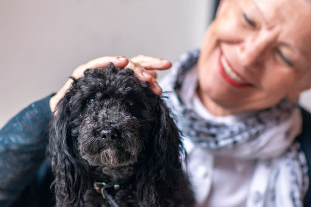 senior-woman-with-her-black-miniature-poodle
