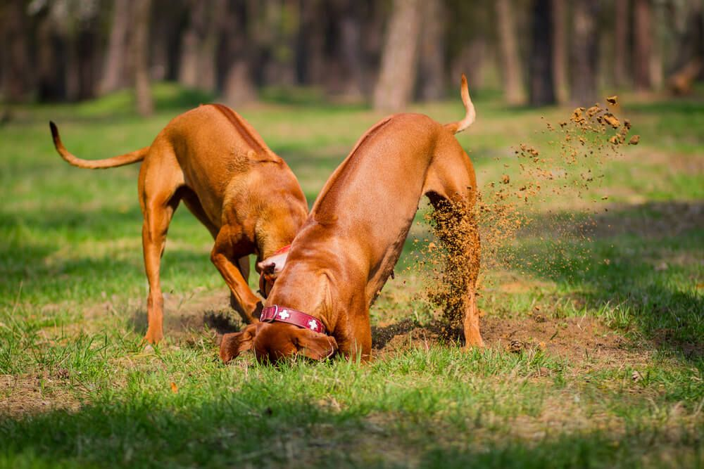 Why Do Dogs Bury Things? 5 Reasons For The Behavior ...