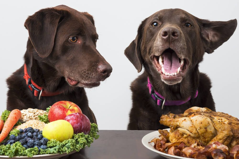 two-dogs-with-food