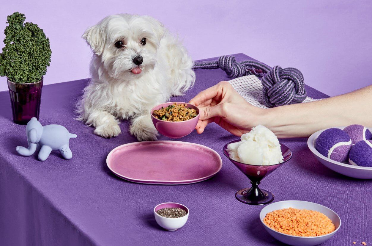 dog-laying-on-table-being-fed