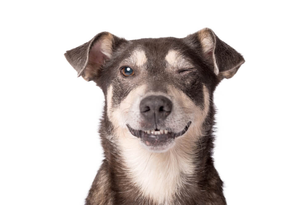 dog-with-one-eye-closed-winking