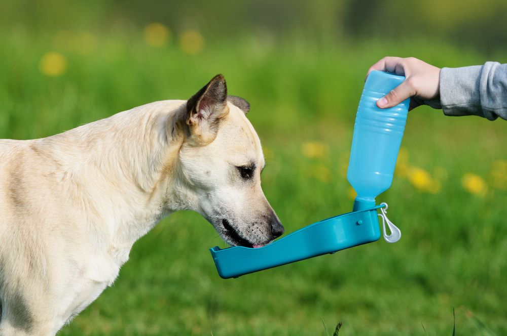 dog-drinks-fresh-water-from-portable-water-bottle