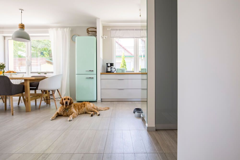 hound-lab-dog-lays-on-the-floor-of-a-kitchen
