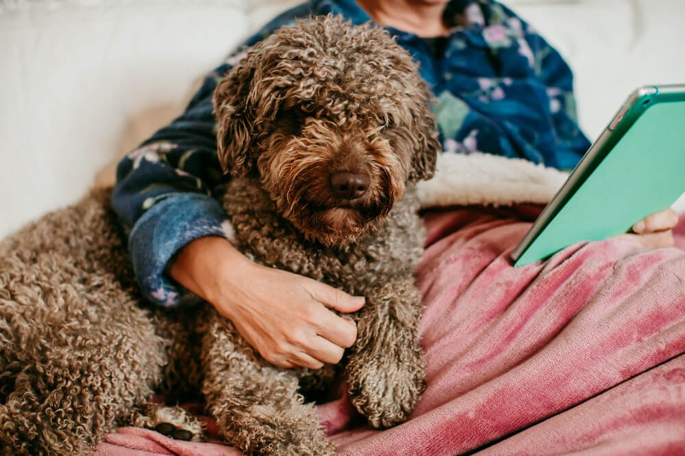 emotional-support-dog-lays-in-bed-with-his-owner-while-she-reads