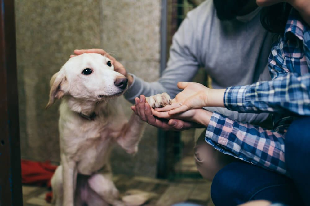 young-couple-meets-a-young-dog-at-an-animal-shelter-for-the-first-time