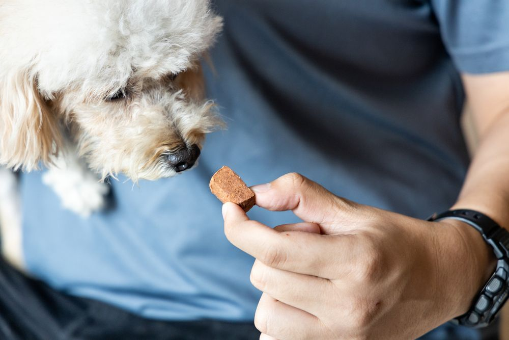 dog-takes-oral-heartworm-prevention-treatment