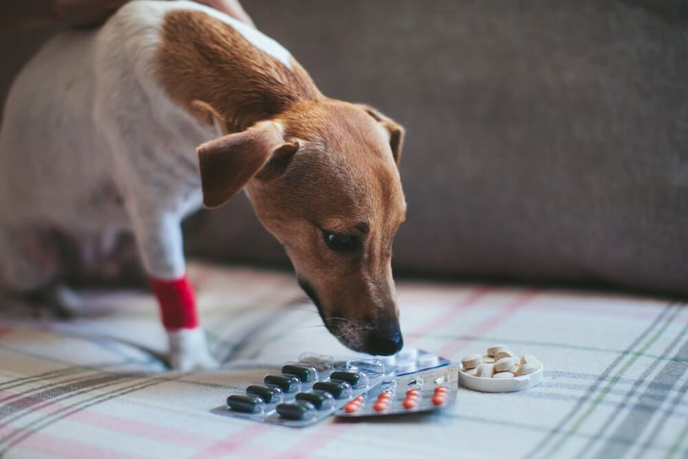 dog-with-a-variety-of-different-pain-relieving-medication
