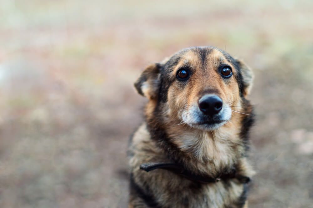 mixed-breed-dog-looks-sad-with-ears-back