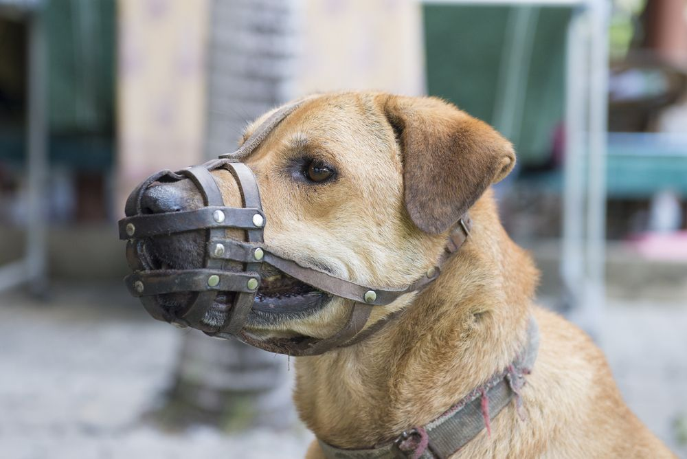reactive-dog-requires-muzzle-on-walks