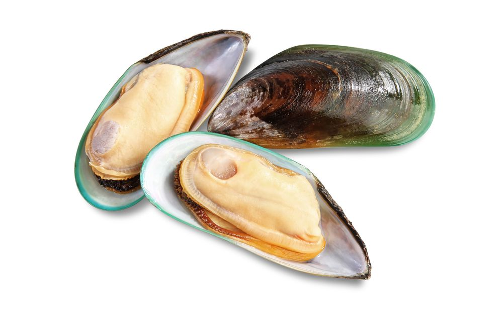 new-zealand-green-lipped-mussel-as-a-source-of-joint-support-for-dogs