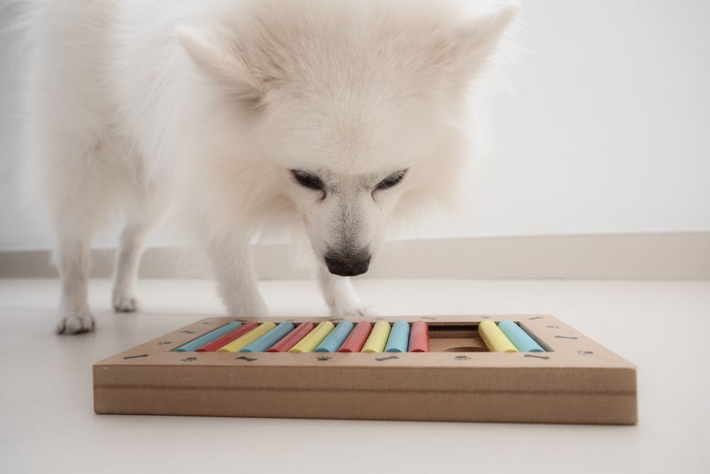 small-white-dog-is-challenged-with-a-treat-puzzle-