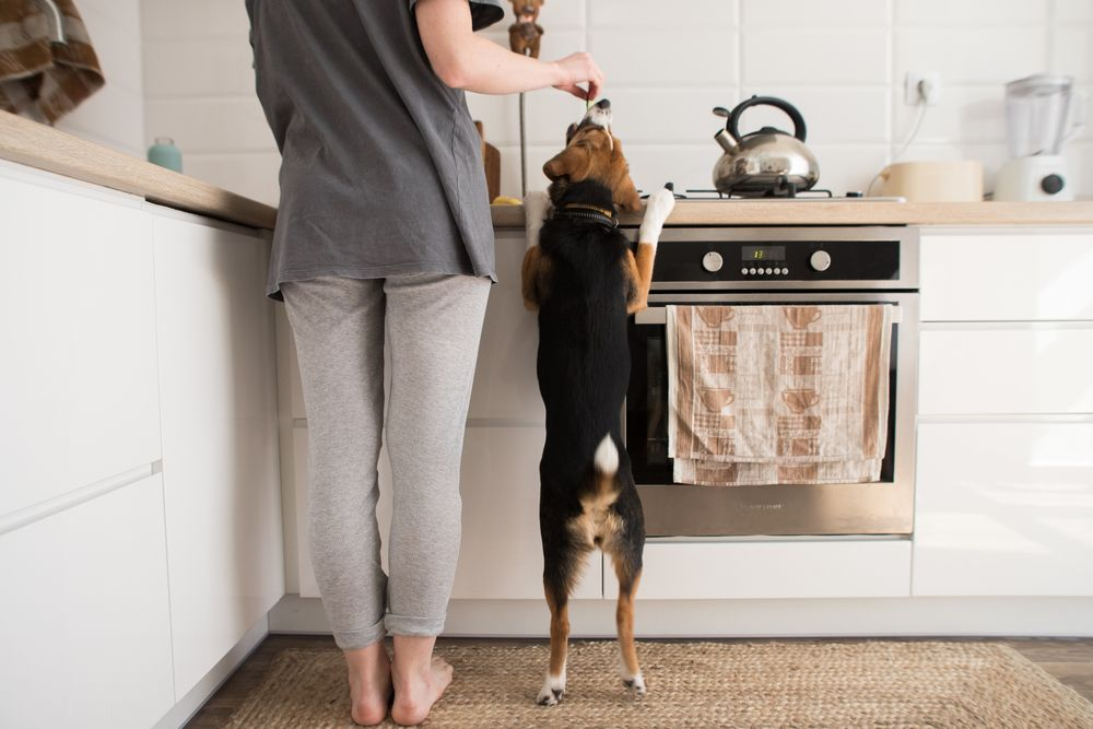 woman-and-her-dog-spend-the-day-in-the-kitchen-together-on-Thanksgiving