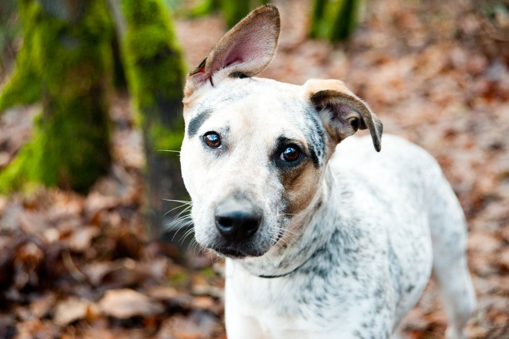 adorable-mixed-breed-dog-out-in-the-woods