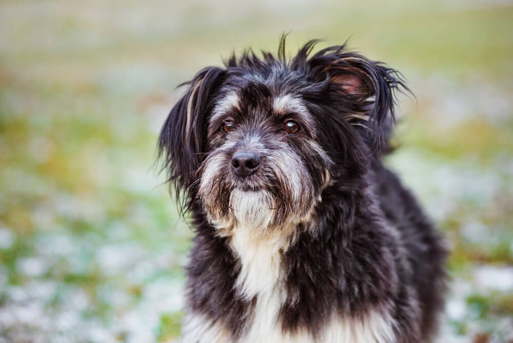 adorable-mixed-breed-dog-spends-time-outdoors