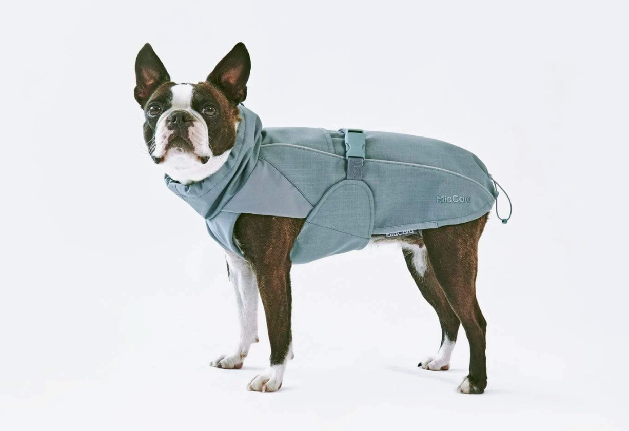 dog-in-fashionable-blue-cold-weather-jacket