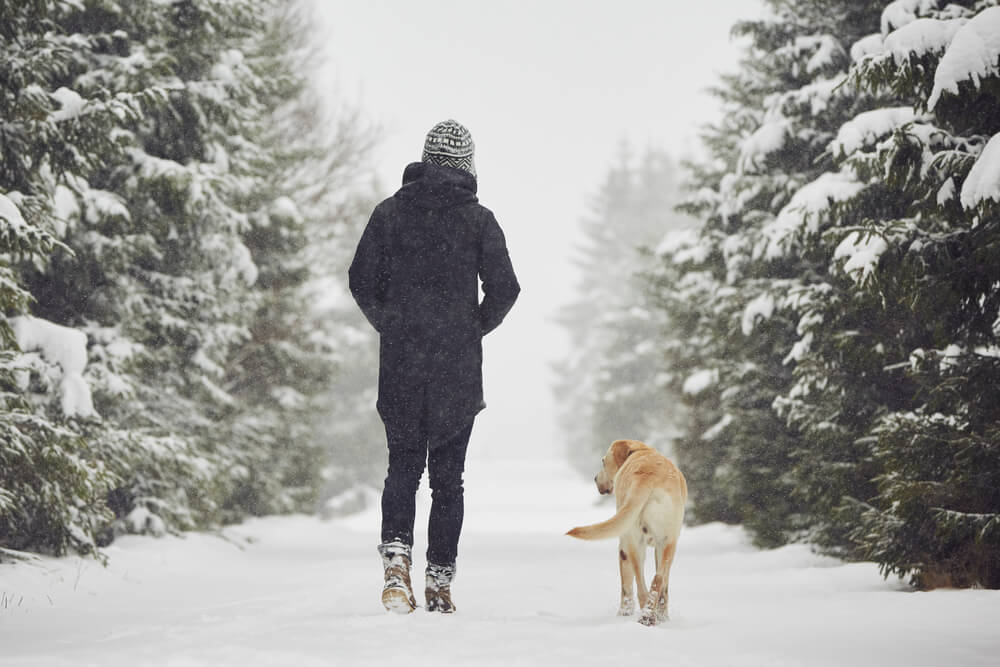 dog-walks-on-snowy-trail-with-her-owner