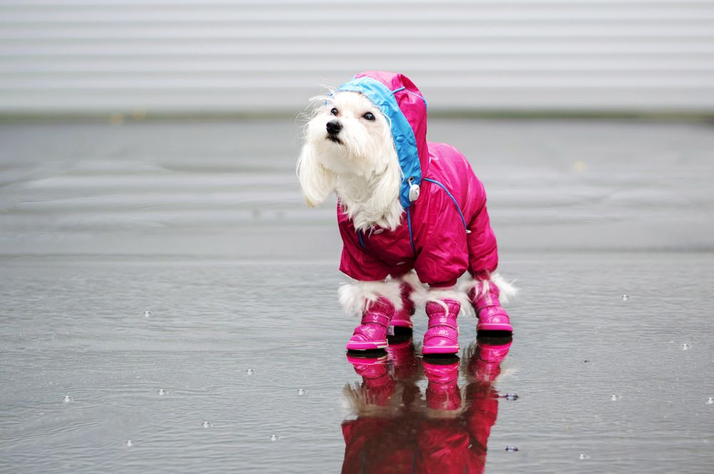 fashionable-dog-in-all-pink-accessories