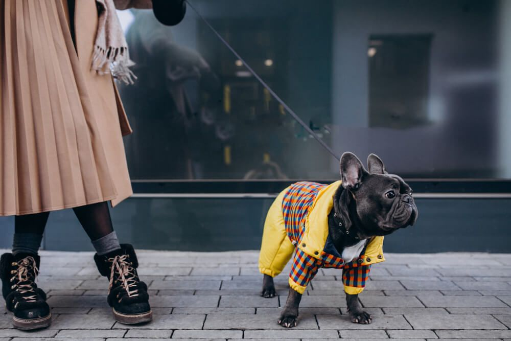 fashionable-woman-with-her-french-bulldog