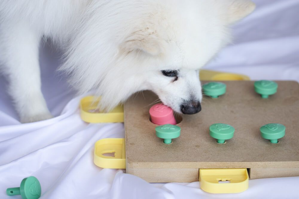 intelligent-dog-cracks-a-treat-puzzle