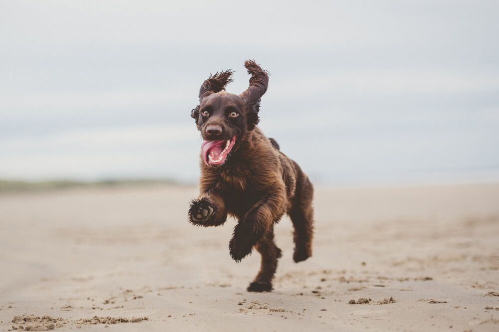 dog-gets-zoomies-on-a-beach