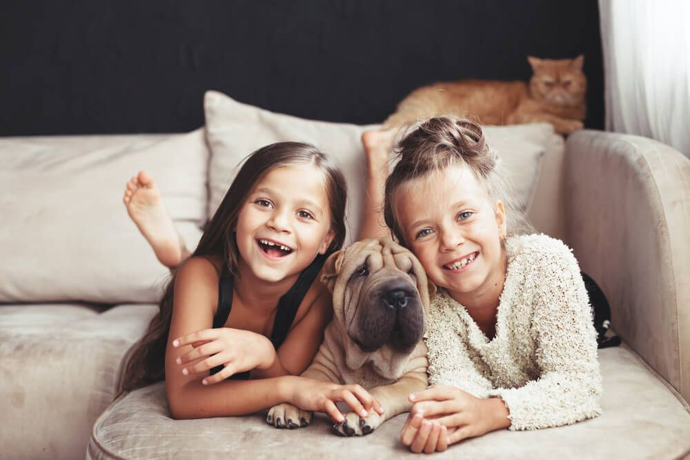 puppy-spends-time-with-two-young-family-members-and-cat