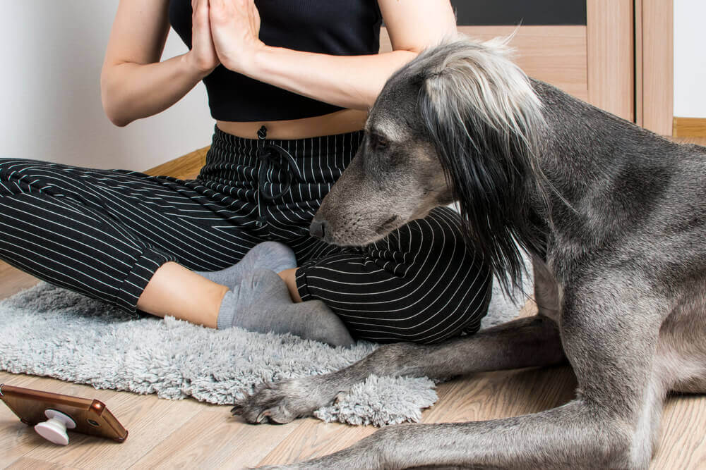 dog-and-her-mom-meditate-and-stretch-together-1