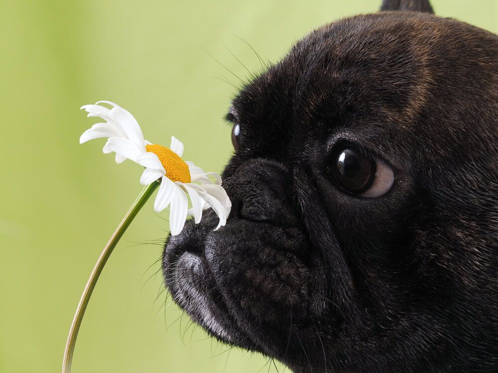dogwithallergies