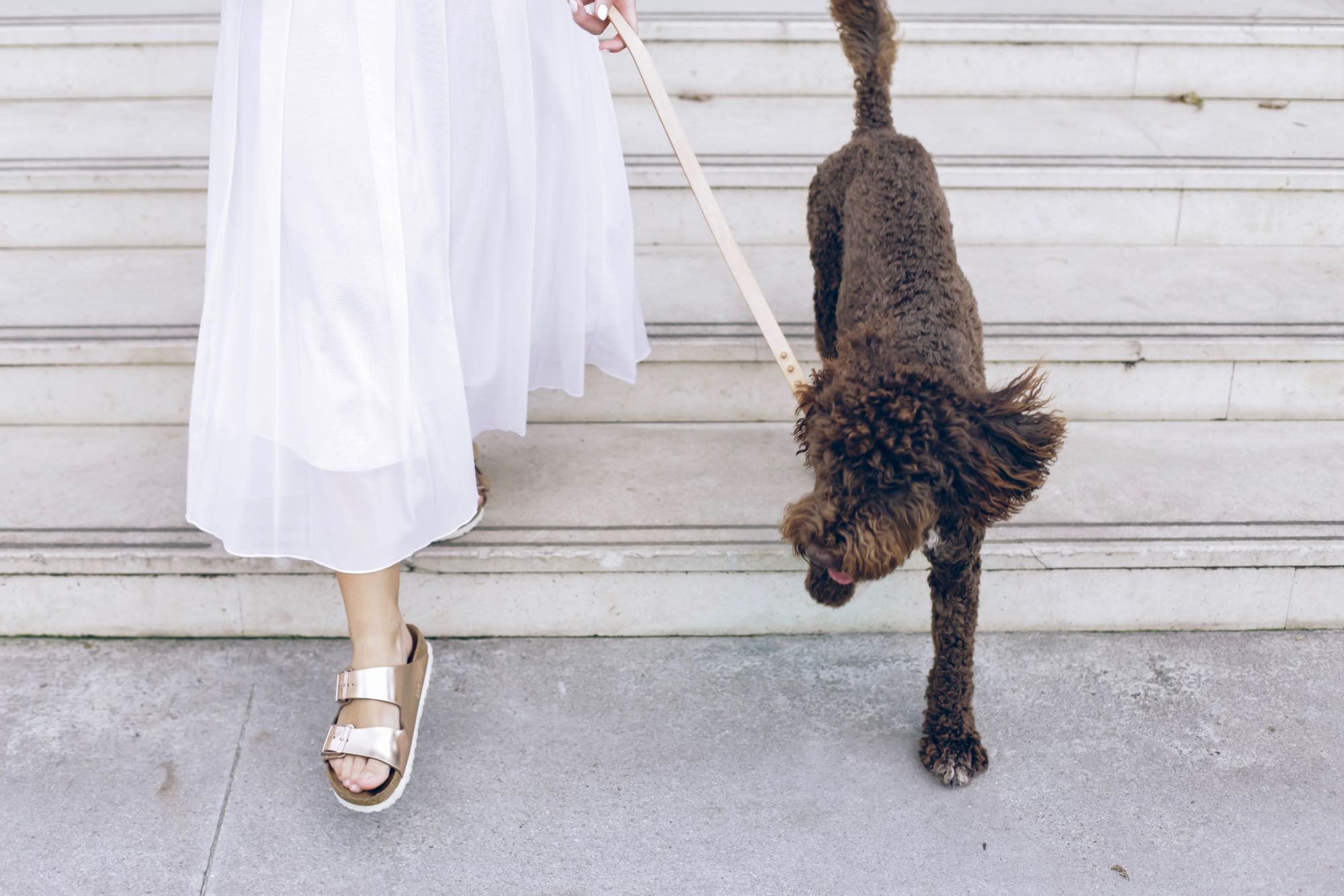 stylish-dog-parent-takes-pup-on-a-walk-down-steps