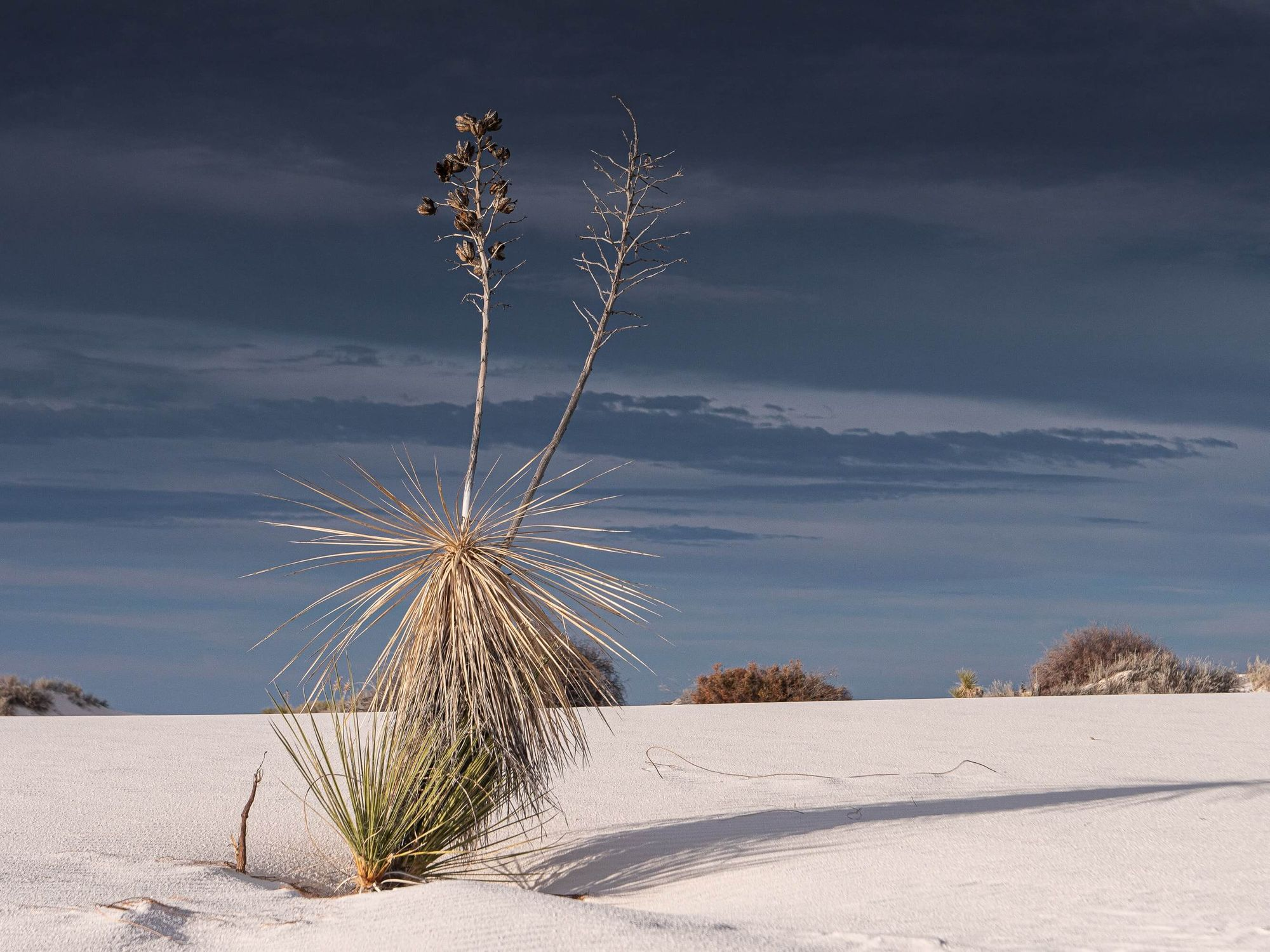 wild-grasses-in-White-Sands-National-Park-New-Mexico