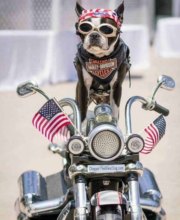 How Chopper the Biker Dog is Bringing Joy to Others, One Bike Ride at a Time