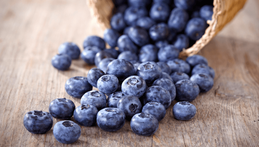 Can Dogs Eat Blueberries? Reasons Why These Berries Are a Dog's Superfood